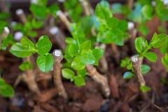 Dirija a jardinagem imagem de stock royalty free