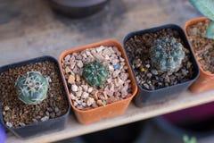 Dirija a jardinagem imagens de stock royalty free