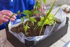 Dirija a jardinagem Fotos de Stock Royalty Free