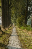 Dirt Bicycle Trail Royalty Free Stock Image