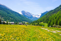 Dirt country road crossing flowery meadows, mountains and forest in scenic alpine landscape and moody sky. Summer adventure and ro Royalty Free Stock Photo