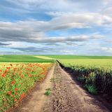 Dirt country road through cultivated field Royalty Free Stock Image