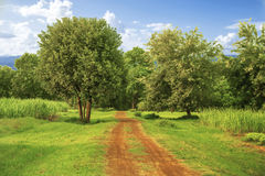 Dirt country road on summer sunset Royalty Free Stock Photography