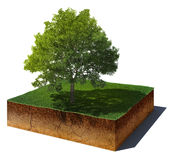 Dirt cube with tree isolated on white background Stock Photo