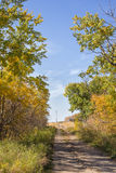 Dirt driveway autumn trees Stock Image