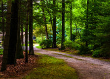 Dirt driveway to a house in a pine forest. Royalty Free Stock Photo