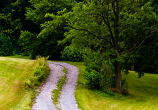 Dirt driveway and tree on a grassy hill Stock Images