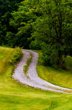 Dirt driveway and tree on a grassy hill Royalty Free Stock Images