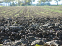 Dirt in a field Royalty Free Stock Image
