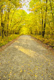A dirt fire road leads into the distance surrounded by yellow and green autumn foliage in a dense forest. Stock Images