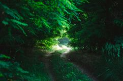Dirt forest road in the form of a natural tunnel in a green deciduous forest. The sun`s rays hardly make their way through the den stock photography