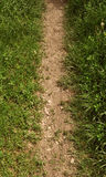Dirt and grass border path Royalty Free Stock Photography