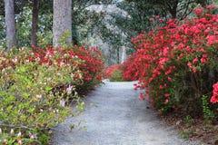 SC Garden Pathway Through Azaleas Stock Photos
