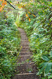 Dirt hiking path in forest Stock Photography
