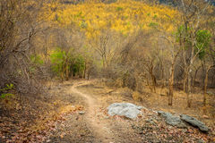A dirt hiking trail in natural burnt forest Royalty Free Stock Image