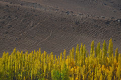 Dirt Landscape background and Poplar trees foreground. Northern Pakistan. Stock Photography