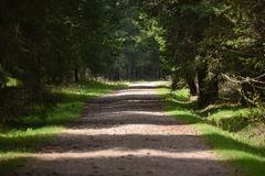 Dirt lane, road in the forest Royalty Free Stock Images