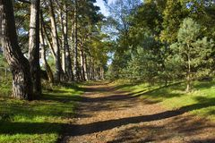 Dirt path Royalty Free Stock Photography