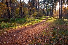 Dirt path in autumn forest. A picture of a dirt path leading through a forest in autumn. The tree leaves have turned brown Royalty Free Stock Photography