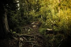 A dirt path in the coniferous forest. Hiking, traveling Royalty Free Stock Photo