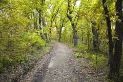 Dirt path in forest. A dirt path through green forest Royalty Free Stock Photography