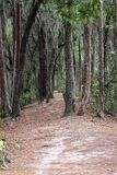 Dirt path into the forest. A dirt path leading deep into the forest Royalty Free Stock Photo