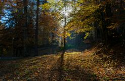 Autumn sunrise in a forest Stock Images