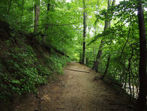 Dirt Path in Forest Royalty Free Stock Photos