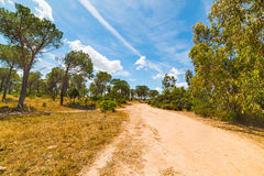 Dirt path in a forest in Sardinia Stock Photography
