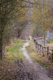 Dirt Path in Forest Woods Daytime Walk Strolling Wild Nature Lan. Dscape Wooden Fence stock photos