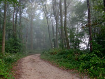 Dirt Path in Forest Woods with Mist stock image