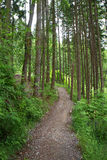 Dirt path going through a tree-filled forest Stock Photography
