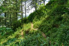 Dirt path in green forest in summer day. Nature background Stock Photography