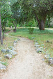 Dirt Path through Green Woods Royalty Free Stock Images