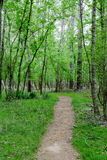 Dirt Path Through Lush Green Forest Stock Photography
