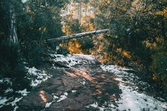 Dirt path in the mountain with a fallen tree Royalty Free Stock Photo