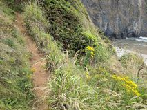 Dirt path by the Oregon coast stock images