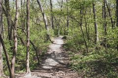 A dirt path stock images