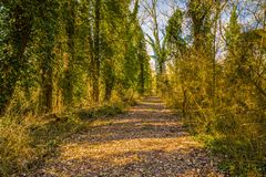 Dirt path through pine forest. Dirt path through the pine forest Royalty Free Stock Photography