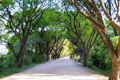 Dirt path in Puerto Mader ecological reserve, framed by trees.  stock photo