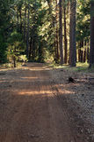 Dirt Path in Redwoods Stock Photo