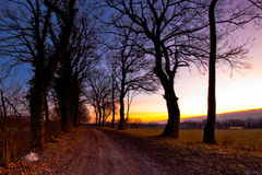 Dirt Path Sunrise. A dirt path between two rows of trees at sunrise Royalty Free Stock Photos