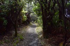 Path through a lush tropical rain forest stock photography