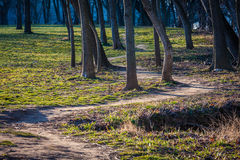 Dirt Path through the Trees Stock Image