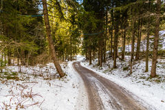 dirt path under the conifers on the Alps Stock Photos