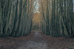 Dirt path in winter forest. Dirt path in a winter forest Royalty Free Stock Images