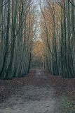 Dirt path in winter forest. Royalty Free Stock Photos