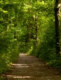 Dirt path through the woods with green leafy trees. Dirt path through the wood with green leafy trees with sun shine coming through the trees stock photo