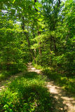 Dirt path through the woods. Royalty Free Stock Image