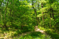 Dirt path through the woods. Dirt path through the woods on a Midwest Summer's afternoon.  Starved Rock State Park, Illinois Stock Photos